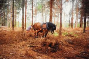 Gentle Giant - Horse at Work in the Forest